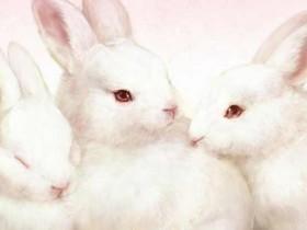小白兔的笑话