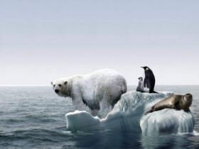 北极熊和企鹅的笑话