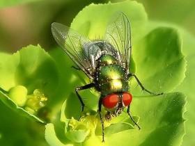 关于苍蝇吃屎的笑话