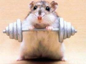 老鼠在一起吹牛