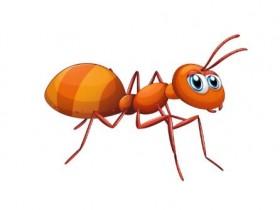 蚂蚁的牙是什么颜色的