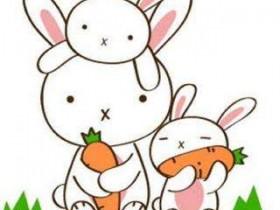 关于小白兔的可爱笑话