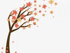 松岛的枫叶