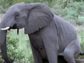 大象小白兔松鼠的笑话