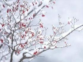 下雪幽默句子 关于雪的浪漫句子