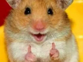 动物笑话 关于动物的笑话故事大全