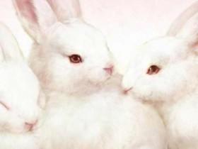 小白兔冷笑话 小兔子的笑话故事大全