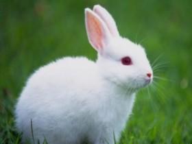 小白兔冷笑话 小黑兔和小白兔的笑话