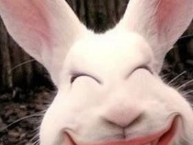 小白兔冷笑话 兔子笑话大全