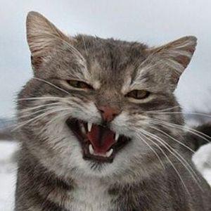爆冷动物,可爱更可笑,动物有情商