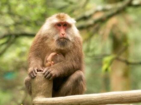 人真的是由猴子变的吗