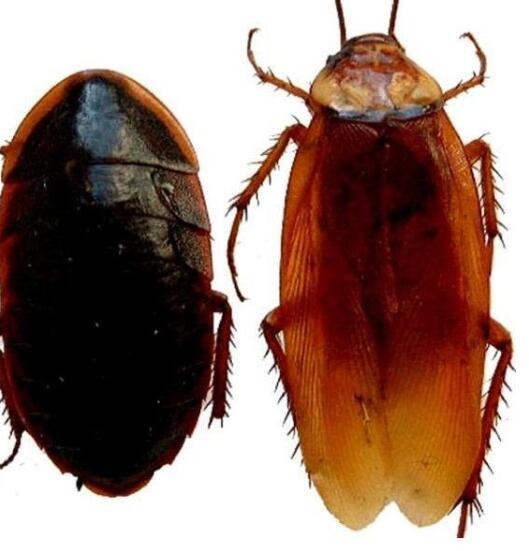 将家里的蟑螂消亡掉
