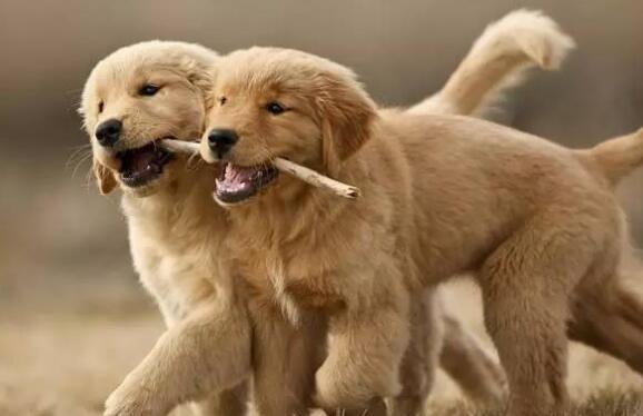 公狗和母狗