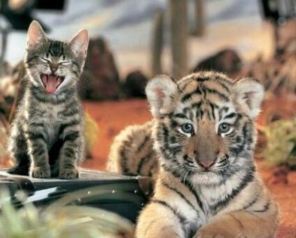 我家的母老虎