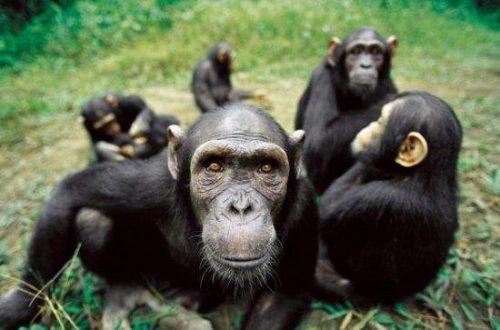 有一个黑猩猩在上午7点