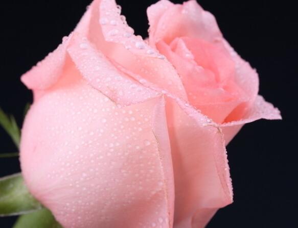 抗日幽默小品剧本 夜色玫瑰