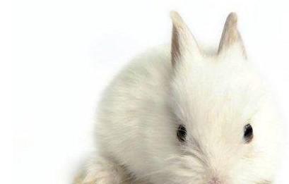 小兔子掉毛的笑话