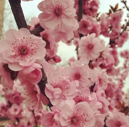 我的桃花朵朵开